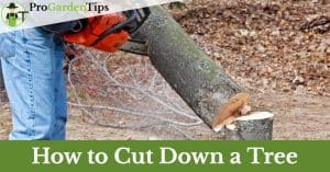 how to cut down a tree with a chainsaw