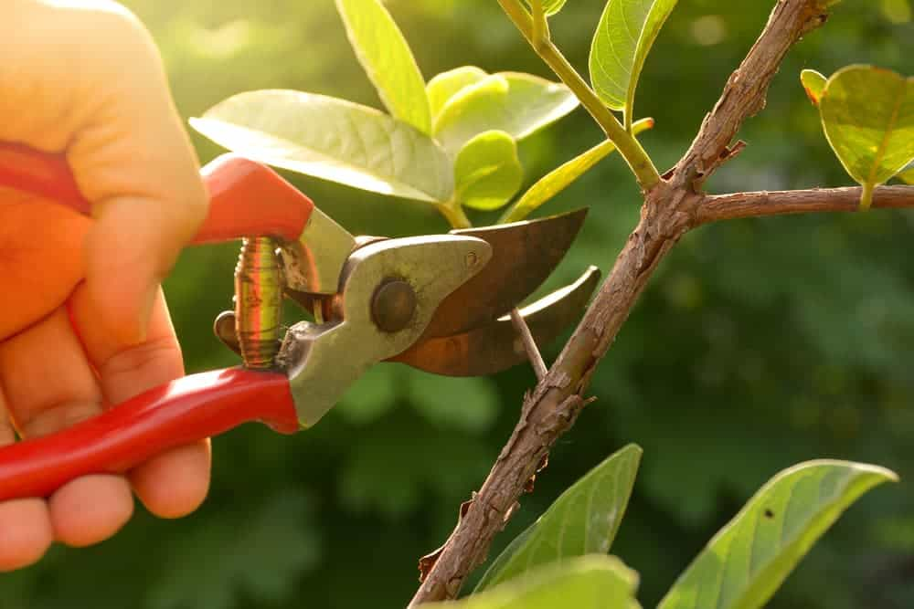 pruners and pruning shears