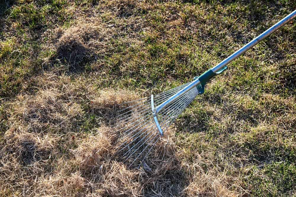benefits of dethatching lawn