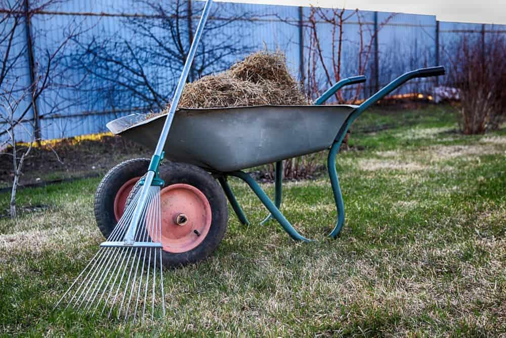 raking thatch off the lawn