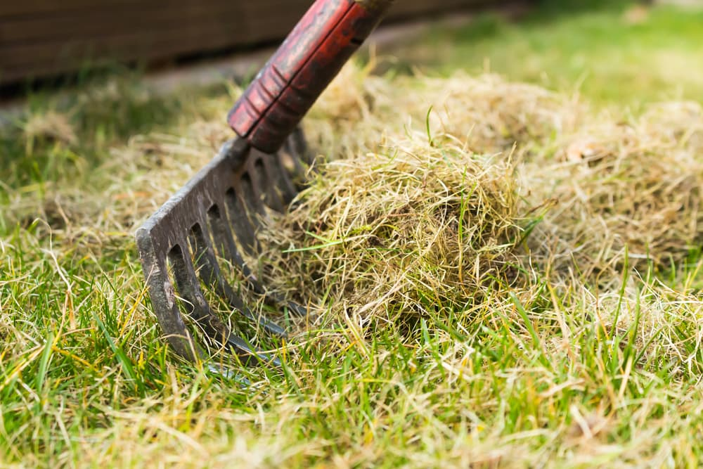 When To Dethatch And Aerate Your Lawn Progardentips