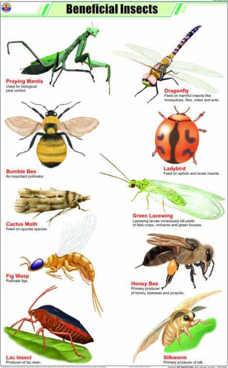 overview of beneficial garden insects