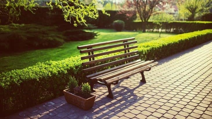 low privet hedge and bench