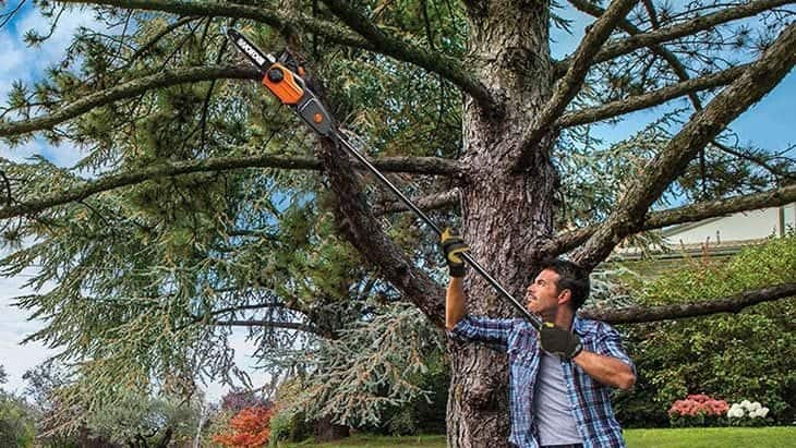 best cordless pole chainsaw reviews
