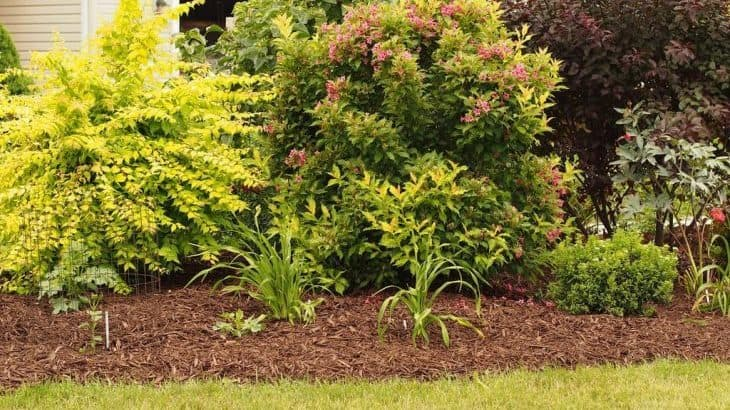 pros and cons of laying mulch in the fall
