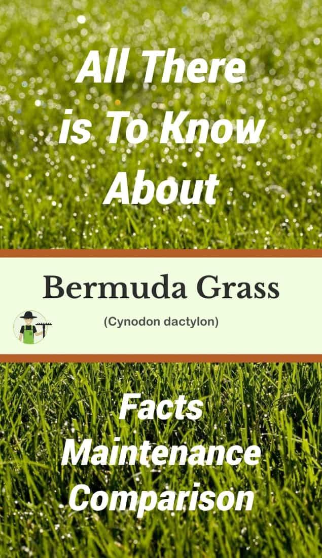 bermuda grass pinterest
