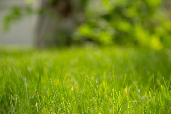 bermuda grass drought tolerance