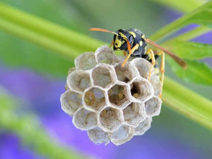 paper wasp small nest