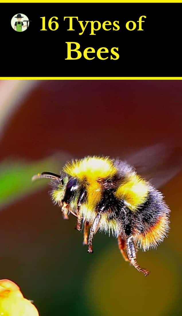 types of bees with pictures pinterest