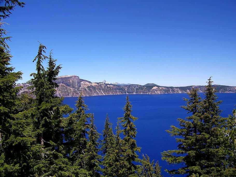 Pine trees at Crater lake in Oregon