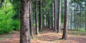 Tree corridor at Promised Land State Park Pennsylvania