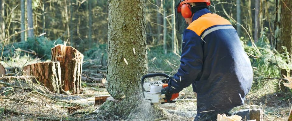 choose felling retreat